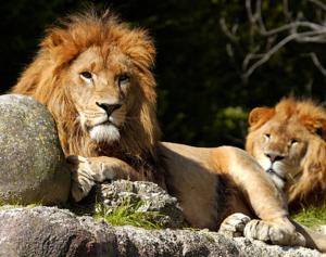 Zoo Safari - Natura Viva