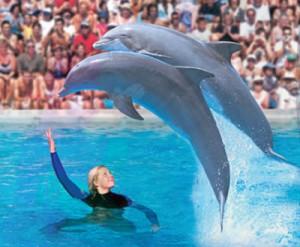 Zoomarine Delfini