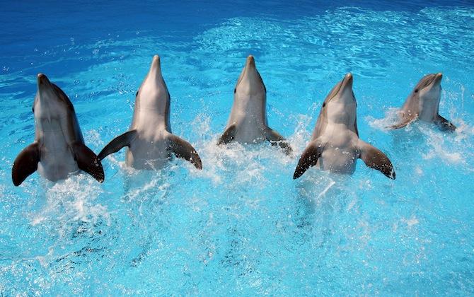 zoomarine i Delfini