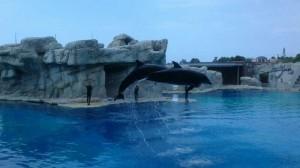 Spettacolo delfini Oltremare