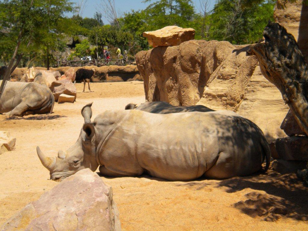 Rinoceronte Bianco Zoom Torino
