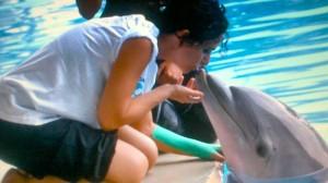 incontra il delfino