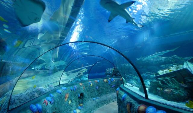 Sea Life Tunnel