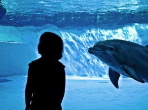 Delfini che passione!